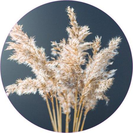 Stoere muurcirkel gedroogd gras
