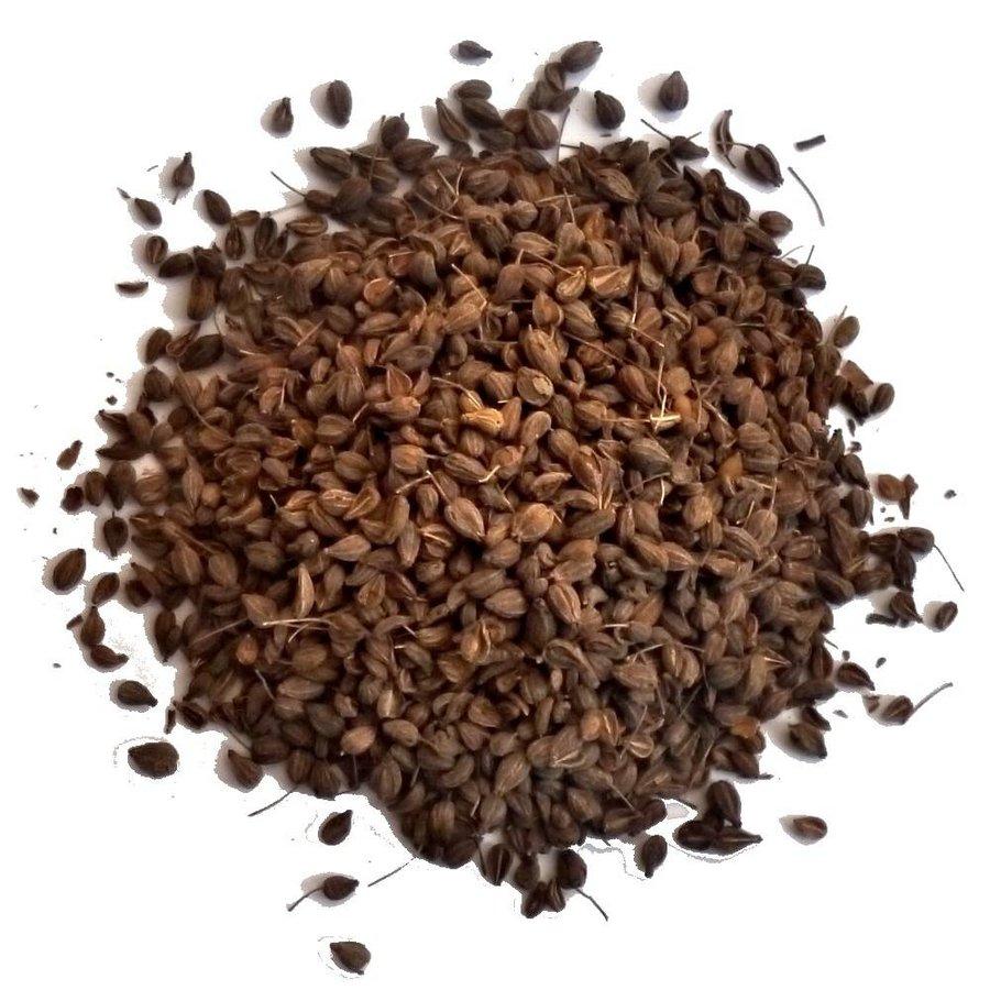 Anis (Pimpinella anisum)-1
