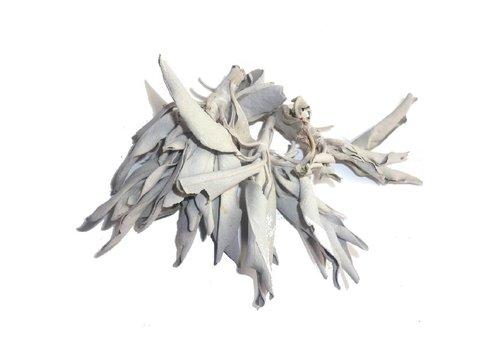 Weißer Salbei ab