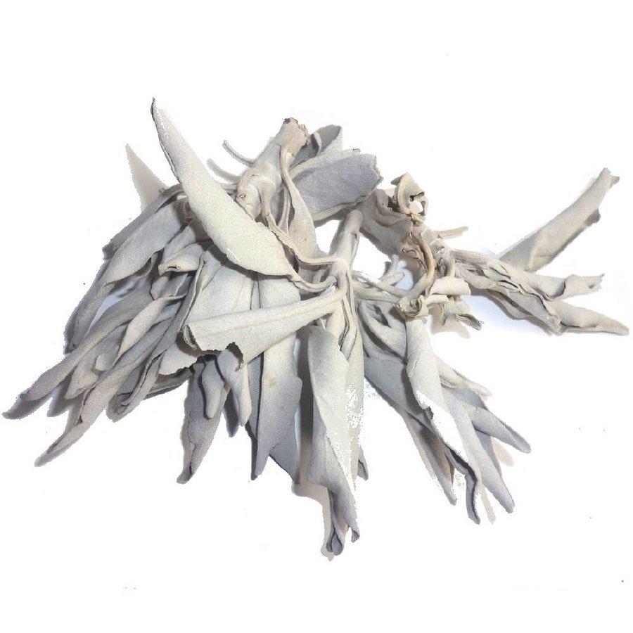 Weißer Salbei (Salvia apiana)-1