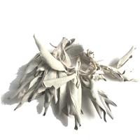thumb-Weißer Salbei (Salvia apiana)-2