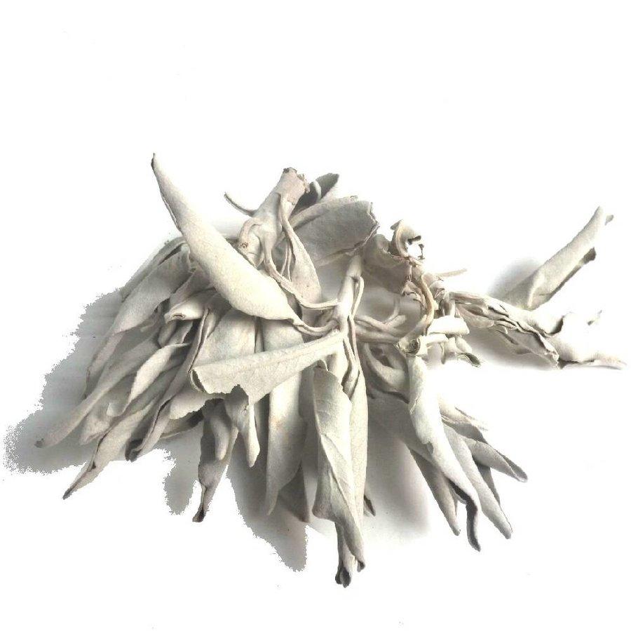 Weißer Salbei (Salvia apiana)-2