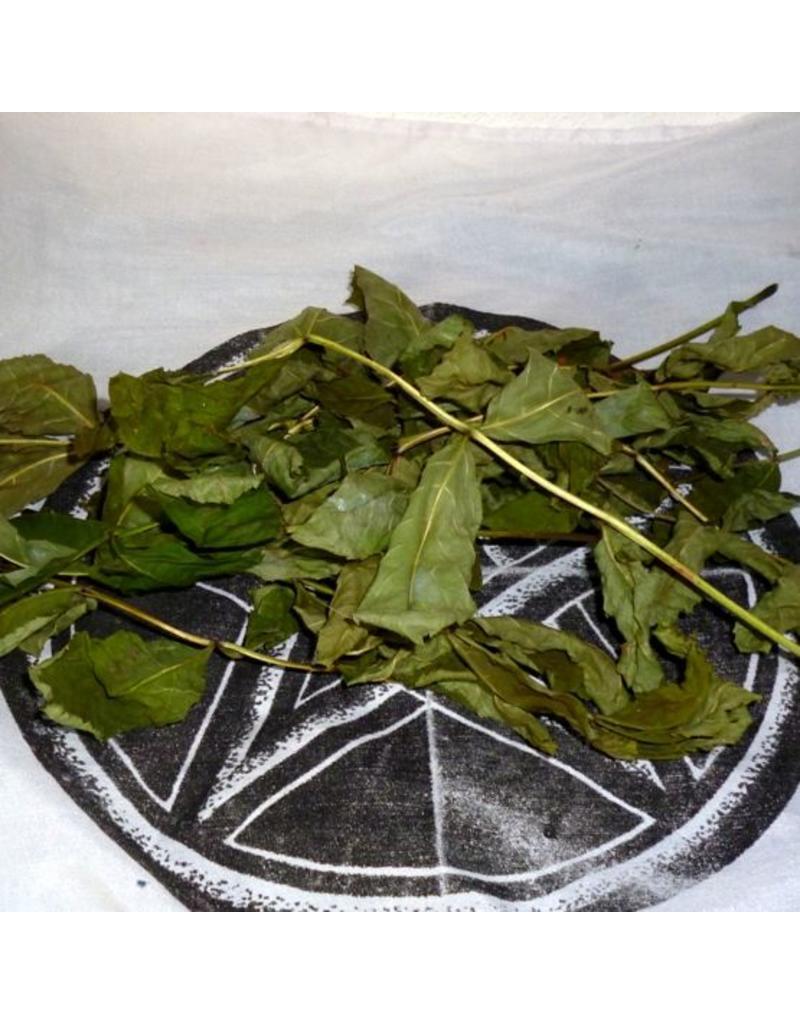 Räuchern Eschenblätter zum Räuchern, getrocknet