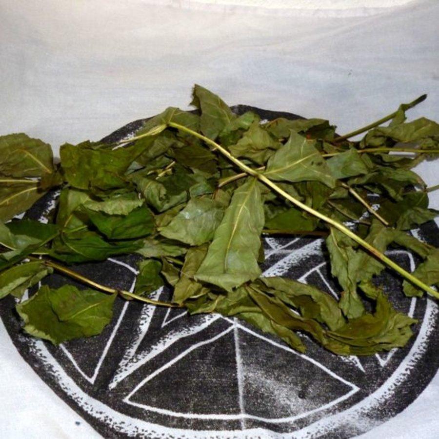 Eschenblätter zum Räuchern, getrocknet-3