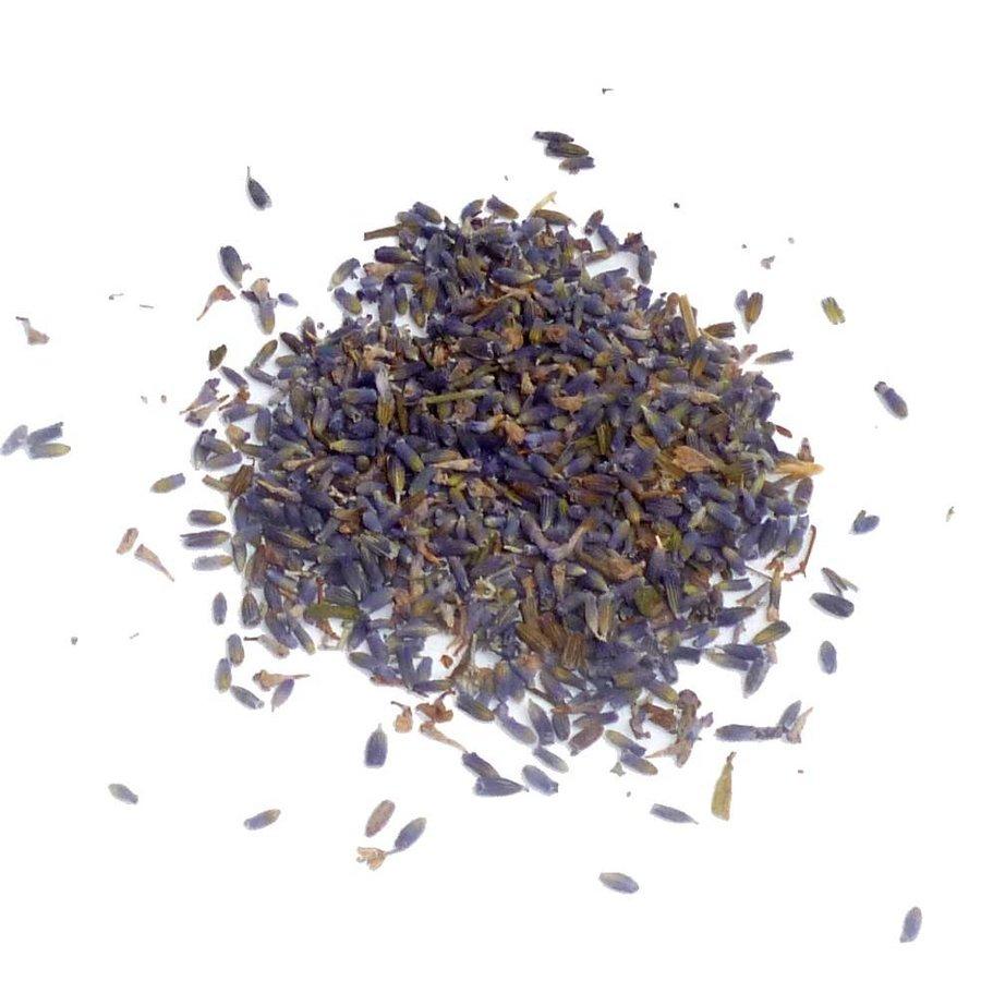 Lavendelblüten, Lavandula angustifolia-1