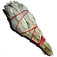 thumb-Salbei, Räucherpflanze, Smudge-Stick-3
