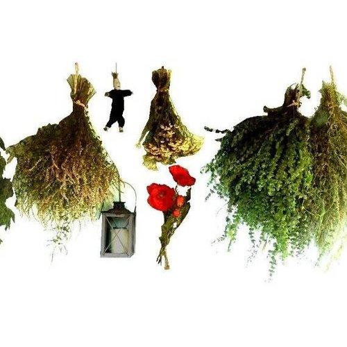 Räucherpflanzen kaufen