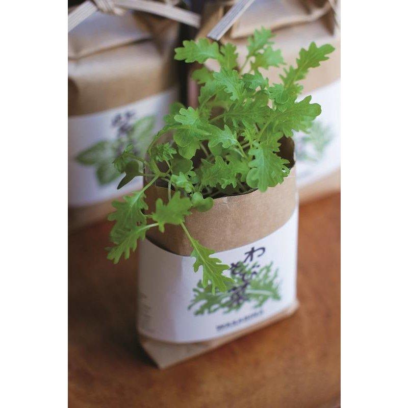 Mini gardens in a rice bag - Lemon basil