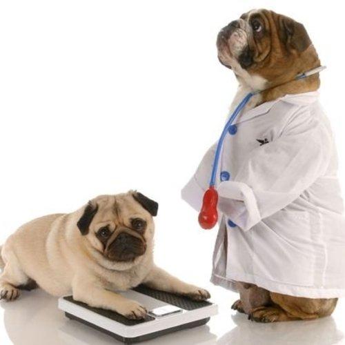 E.H.B.O tips voor honden