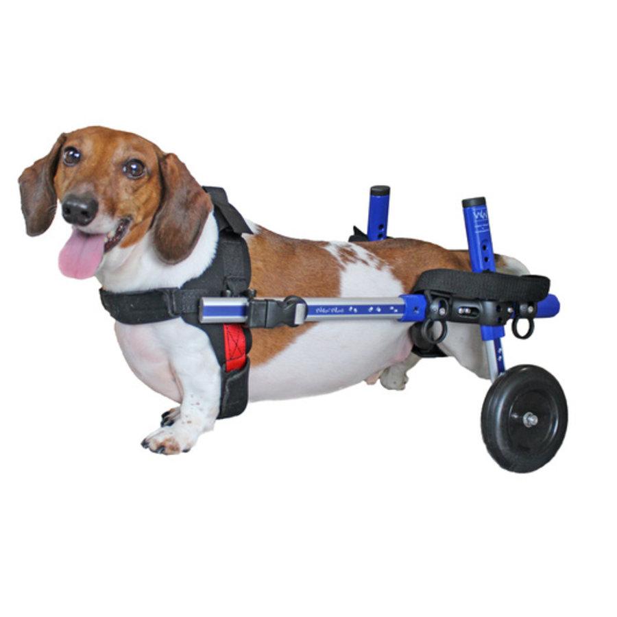 Rolstoel voor gehandicapte hond-2