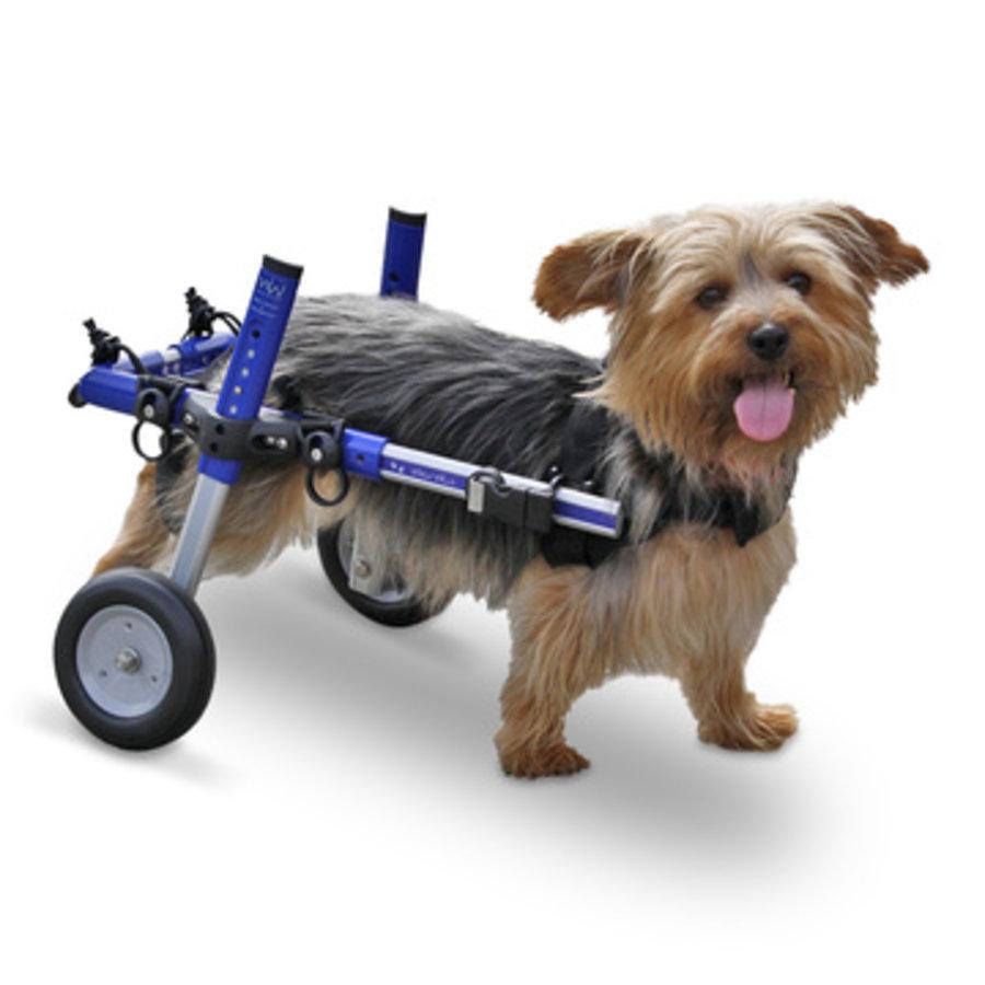 Rolstoel voor gehandicapte hond-3