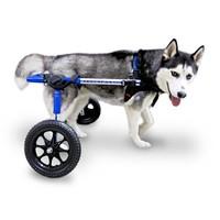 thumb-Rolstoel voor gehandicapte hond-4