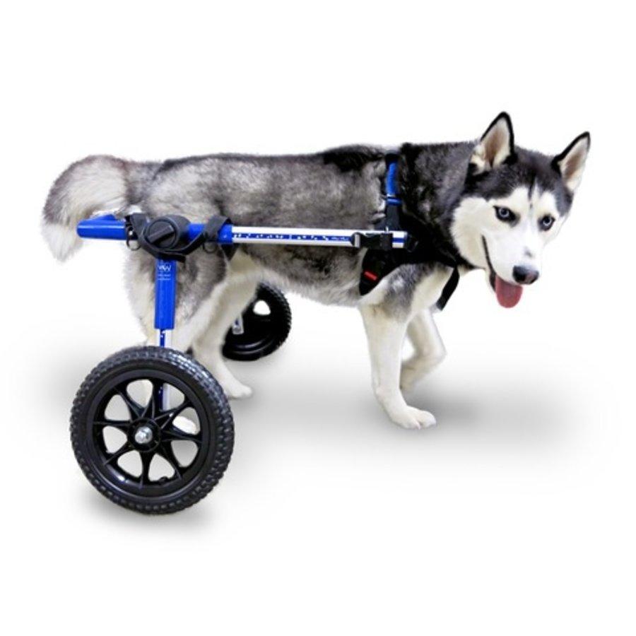 Rolstoel voor gehandicapte hond-4