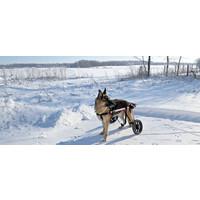 thumb-Rolstoel voor gehandicapte hond-6