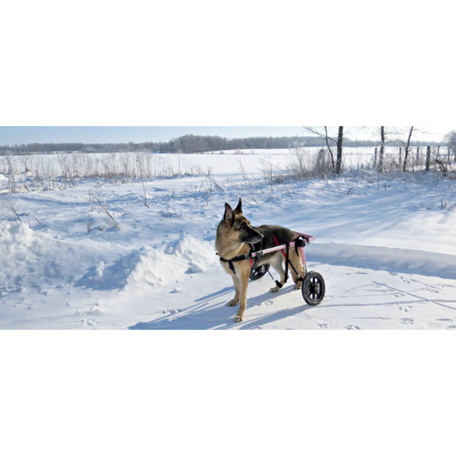 Rolstoel voor gehandicapte hond-6