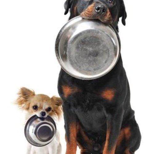 Wat mag je hond niet eten?