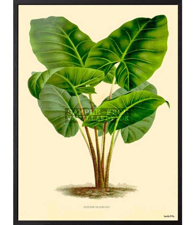 Vanilla Fly Print  GREEN PLANT | 30x40cm