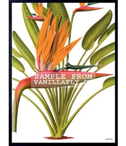 Poster | RED PALM TREE | 20x25