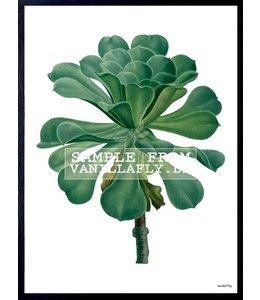 Poster Succulent | 20x25cm