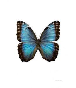 Foto Print Vlinder | 30x40 cm | Montezuma