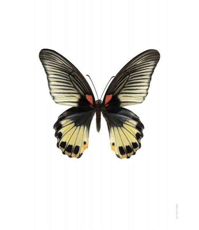 Macrofoto Poster | Vlinder Papilio memnon