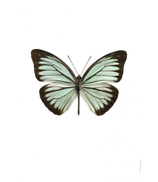 Liljebergs Macrofoto Poster | Vlinder Pareronia valeria