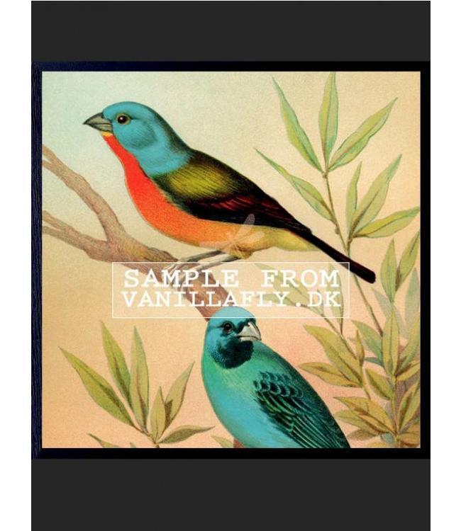 Vanilla Fly Print BLUE BIRDS vierkante poster