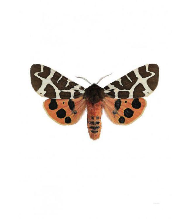 Liljebergs Macrofoto Poster | Nachtvlinder Arctia caja