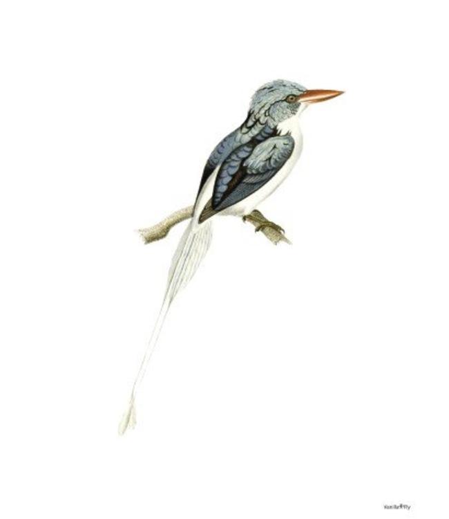 Print Blauwe Vogel | Blue Bird 20x25cm