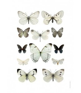 Liljebergs Macrofoto Print | 50x70 cm | Butterflies Black and white