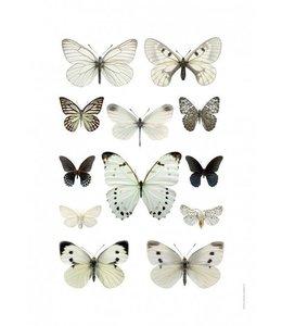 Macrofoto Poster | Vlinders Zwart Wit | 50x70 cm