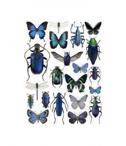 Foto Print Insecten | 30x40 cm | Blauw