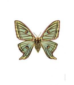Liljebergs Print Vlinder | 30x40 cm | Graellsia isabellae