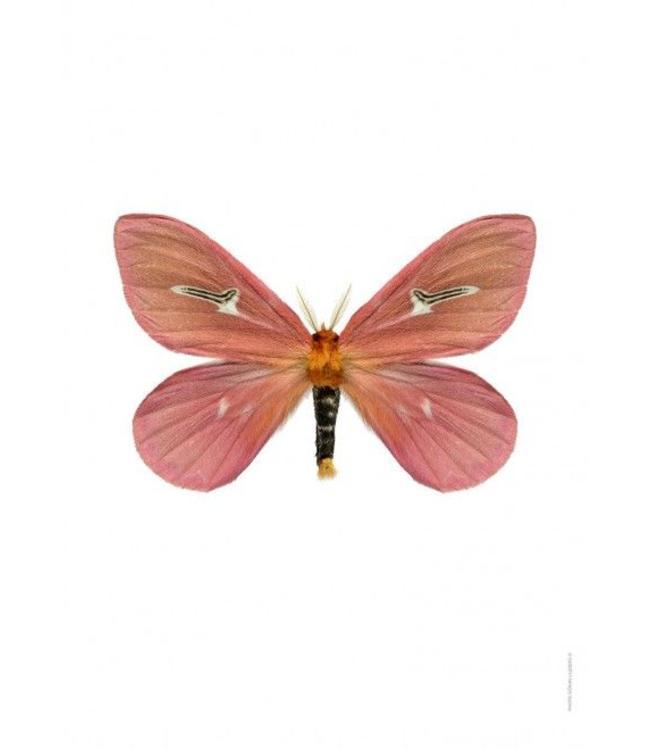 Liljebergs Macrofoto Poster roze vlinder 30x40