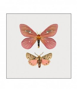 Liljebergs Fotoprint Vlinders | 15x15 cm | in lijst