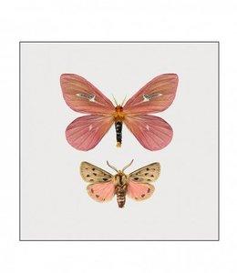Photo Print Moth in frame | 15x15 cm