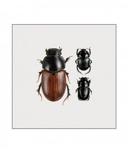 Liljebergs Photo Print Beetles in frame | 15x15 cm