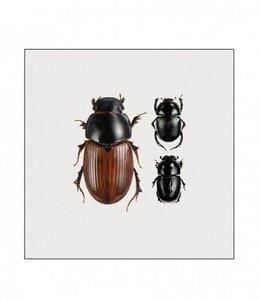 Photo Print Beetles in frame | 15x15 cm