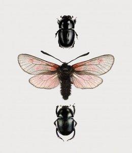 Photo Print Beetles in frame | A5