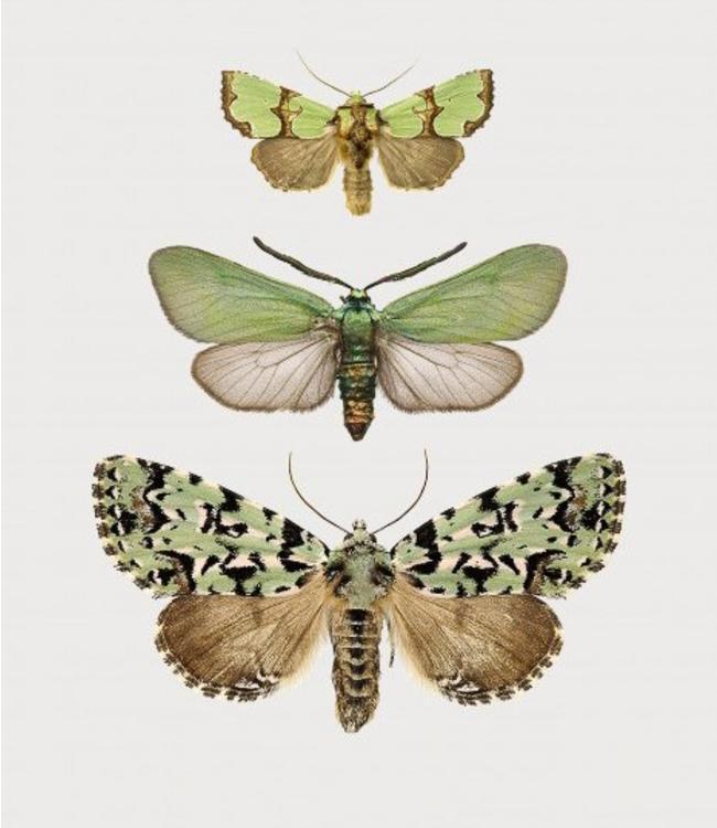 Liljebergs Green Butterflies Mini print | A5 in black frame