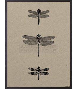 Poster 3 DRAGONFLIES | 20x25 cm