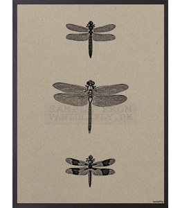 Vanilla Fly Poster 3 DRAGONFLIES | 20x25 cm