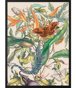 Vanilla Fly Poster Botanical | 30x40