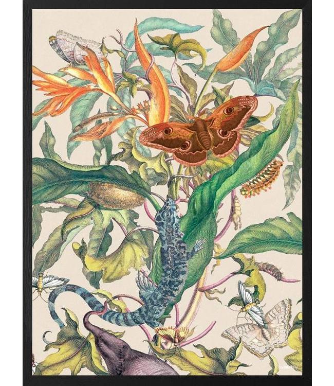 Vanilla Fly Poster Botanical 3 | 30x40
