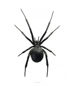 Liljebergs Poster Black Widow | 30x40 cm