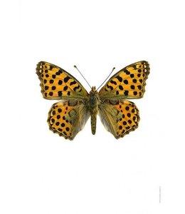 Liljebergs Print Vlinder | 30x40 cm | Issoria lathonia