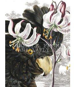Poster BLACK PARROT | 20x25