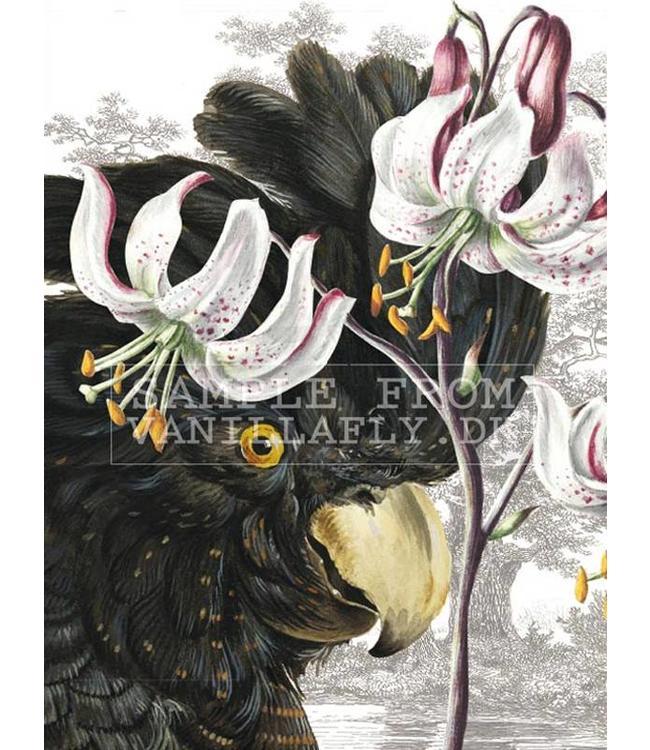 Vanilla Fly Print | BLACK PARROT