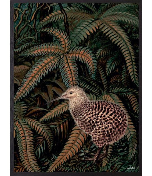 Poster Vogel Kiwi Jungle | 20x25