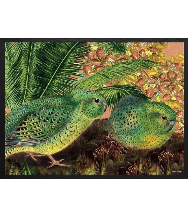 Vanilla Fly Poster Vogels Parrot Orchid  | 30x40